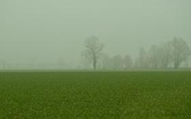 Обои трава, деревья, ветви, природа, поле, зелень, туман