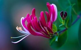 Обои листья, цветок, экзотика, лепестки