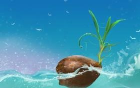 Обои море, листья, вода, птицы, росток, кокос, орех