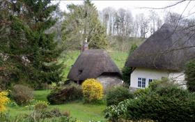 Обои природа, город, фото, Англия, дома, ель, деревня