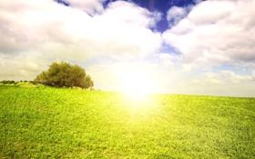 Обои поле, лето, небо, трава, солнце, облака, пейзаж