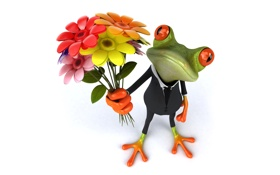 Обои flowers, frog, funny, elegant, лягушка