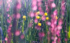 Картинка цветы, весна, Май, луговые, разнотравие