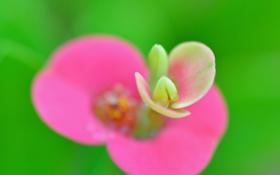 Обои природа, цветок, экзотика, лепестки, растение
