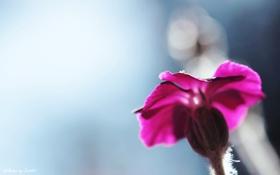 Обои цветок, zim2687, purple blur