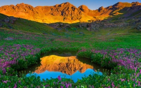 Обои пейзаж, горы, цветы