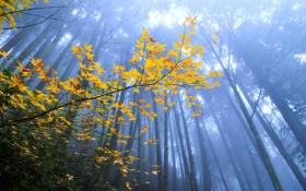 Картинка осень, лес, листья, деревья, ветка, дымка