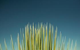 Обои стебельки, трава, фоновые обои, фото, растения, макро