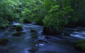 Обои лес, камни, река
