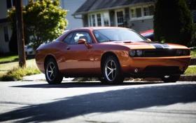 Обои 2008, Dodge, SRT8, Challenger, Geiger