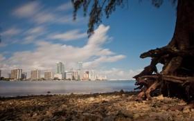 Обои дома, Майами, Флорида, Miami, florida, отели, vice city