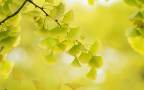 Обои осень, листья, ветки, дерево