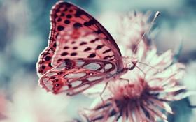 Картинка бабочка, насекомое, боке