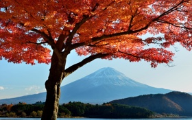 Обои осень, небо, листья, деревья, озеро, Япония, гора Фудзияма