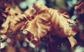 Обои осень, листья, макро, природа, сухие, жёлтые
