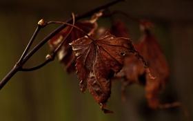 Обои макро, лист, ветка, сухой, Декабрь