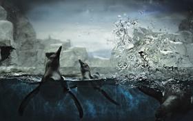 Обои вода, брызги, лёд, пингвины, антарктида