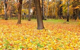 Обои опадаюшая, Perfect autumn, осень, красок, время, листва