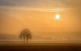 Картинка поле, солнце, деревья, туман, утро
