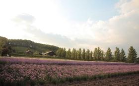 Обои поле, дома, цветы
