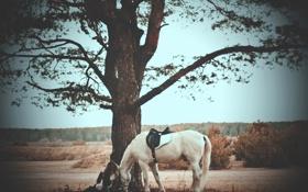 Картинка дерево, лошадь, Девушка