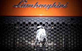 Картинка надпись, Lamborghini, решетка, эмблема, бык, ламборгини, ораньжевый