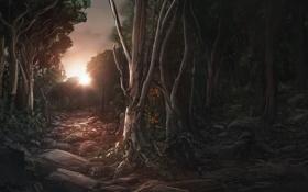 Обои закат, лес, деревья, солнце, арт, камни
