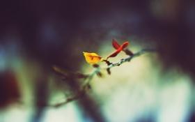 Картинка холод, зима, листья, трещины