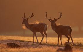 Обои осень, природа, олени