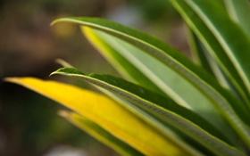 Обои листья, природа, обои, макро фото