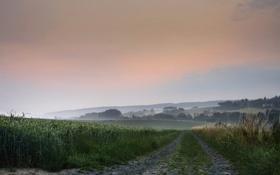 Картинка дорога, поле, лето, небо, деревья, природа, туман