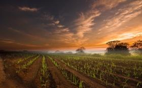 Картинка поле, небо, облака, туман, утро