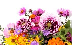 Картинка листья, букет, белый фон, хризантемы, георгины