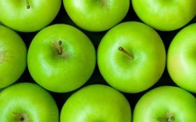Обои яблоки, еда, зеленые