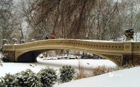 Картинка зима, снег, деревья, люди, мостик, Нью Йорк, кусты