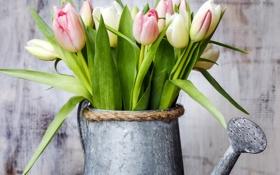Картинка тюльпаны, лейка, flowers, tulips, spring