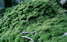 Обои зелень, ветки, мох