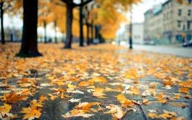 Картинка дорога, осень, листья, деревья, город, улица, желтые