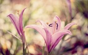 Картинка макро, цветы, обои, лепестки