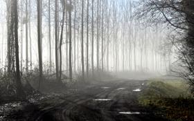 Картинка дорога, деревья, поворот, грязь