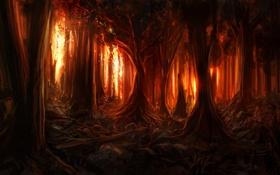 Обои лес, деревья, пожар, огонь, искры