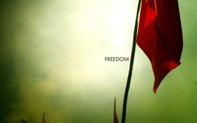 Обои свобода, фото, фон, настроение, обои, флаги, лозунг