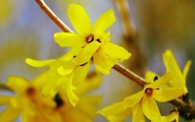 Обои цветы, природа, ветка, лепестки