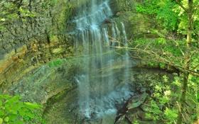 Картинка листья, камни, дерево, скалы, водопад
