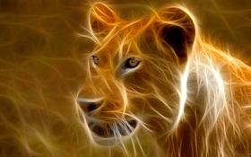 Обои львица, лев, африка, кошка, штрих