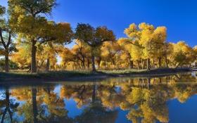 Обои лес, осень, небо, вода, деревья