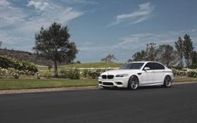 Обои дорога, белый, газон, BMW, БМВ, white, f10