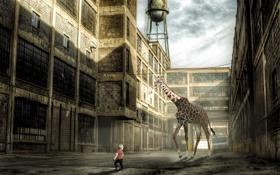 Обои ситуация, мальчик, монтаж, жирафа