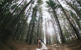Обои лес, солнце, деревья, Love, Beautiful, невеста, Wallpaper