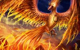 Обои фантастика, огонь, птица, крылья, клюв, арт, phoenix